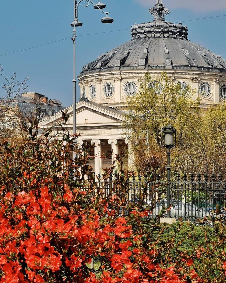 Muzeului Național de Artă al României