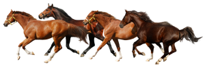 download-horse-PNG-transparent-images-transparent-backgrounds-PNGRIVER-COM-1-2-horse-png-9