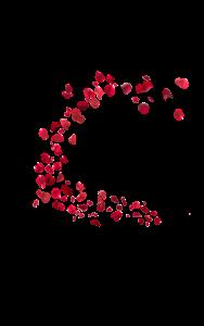 Falling-Rose-Petals-PNG-HD